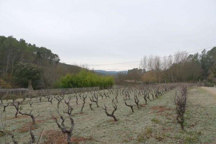 Vieux Mas sur 4 hectares de terrain avec vignes, Provence